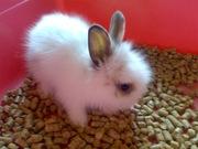 Малыши-декоративные кролики