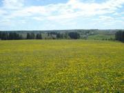 Продам земельный участок по Сарапульскому тракту.