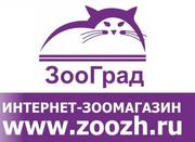 Интернет зоомагазин. Акция. Доставка по России 240 руб.